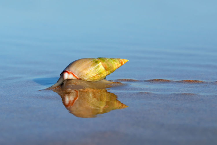 Close-up of shell on sea