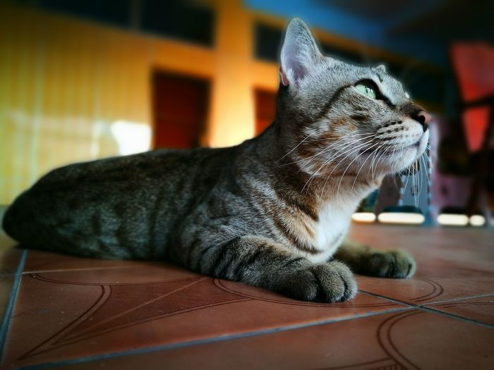 Vacant Cat on