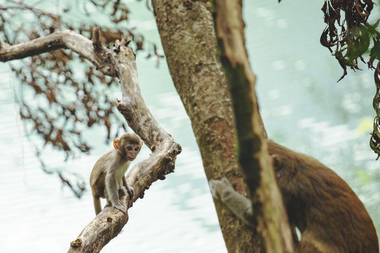 Monkeys on tree trunk