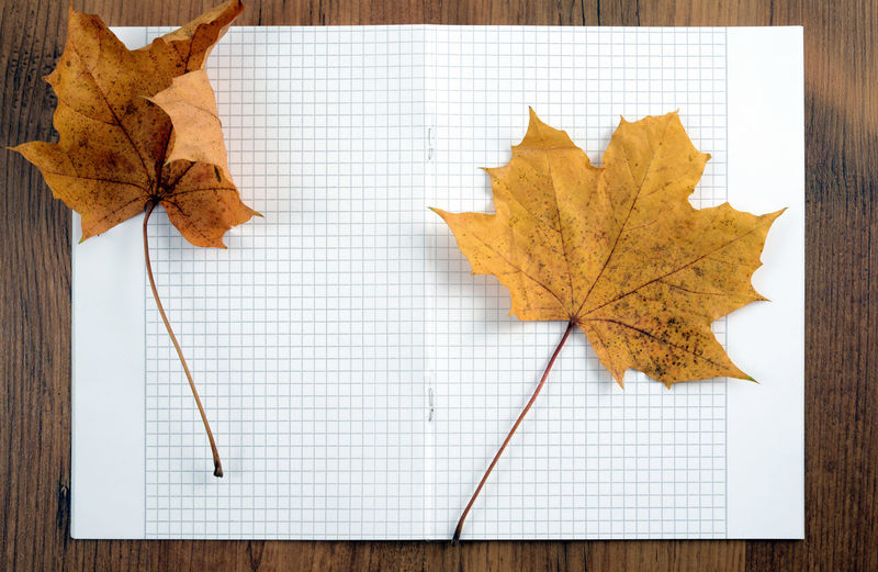 High Angle View Of Maple Leaves On Paper At Wooden Table