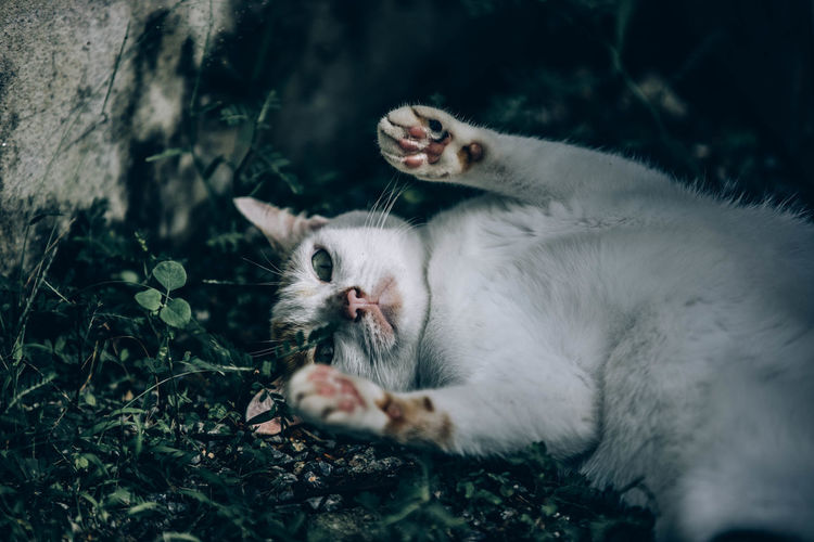 Cat relaxing in a forest