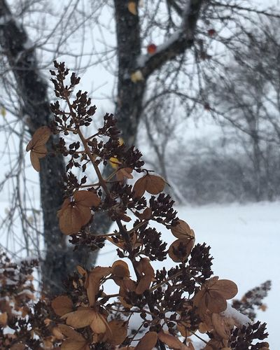 Tree Nature Growth Branch Beauty In Nature Cold Temperature Snow Winter Bare Tree Outdoors Day No People Close-up Fragility Sky Freshness Streamzoofamily
