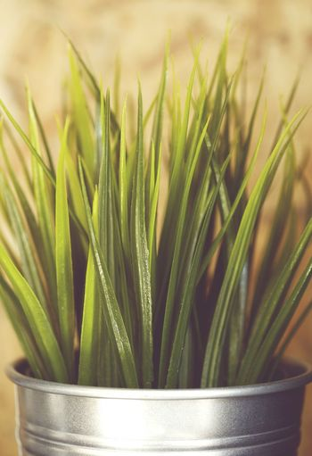 Close-up Growth Plant Nature Green Color Freshness No People Grass Metal Pot