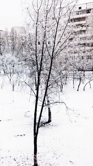 Winter Snow White White Snow Trees Tree White Tree White Winter Beautiful Beautiful Nature