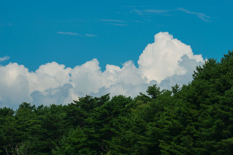 Clouds And Forests And Summer Sky Summertime Blue Sky Clouds And Sky Summer Clouds Summer Sky  夏z 暑い夏暑い夏