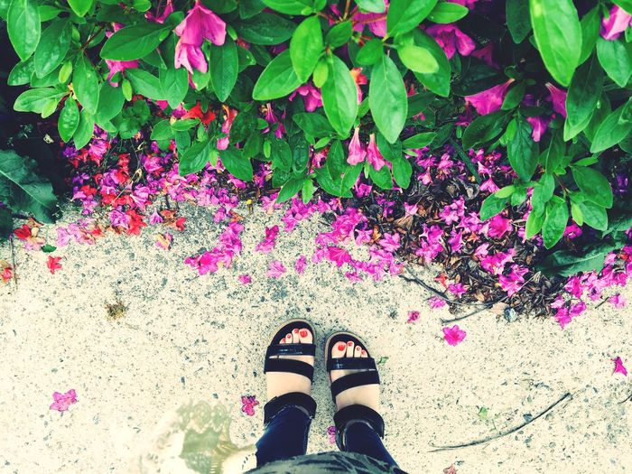 Flowers Relaxing