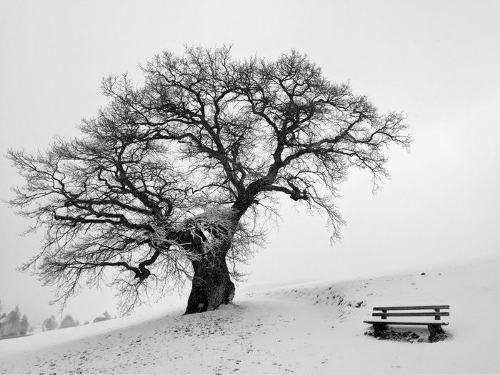 Lonely oak in the Black Forest Tree Oak oaks sSnownNaturecCold TemperaturebBare TreecClear SkybBeauty In NaturetTranquilitytTranquil ScenesScenicsoOutdoorsbBranchdDaynNo PeoplelLandscapesSkylLoneiIsolatedcCold