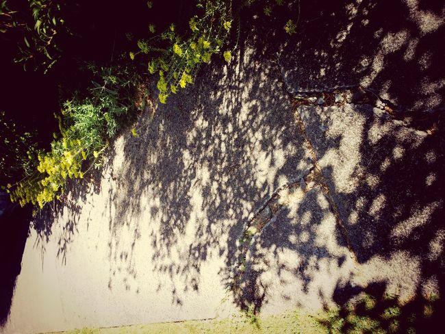 Garden Shadows & Lights Summer