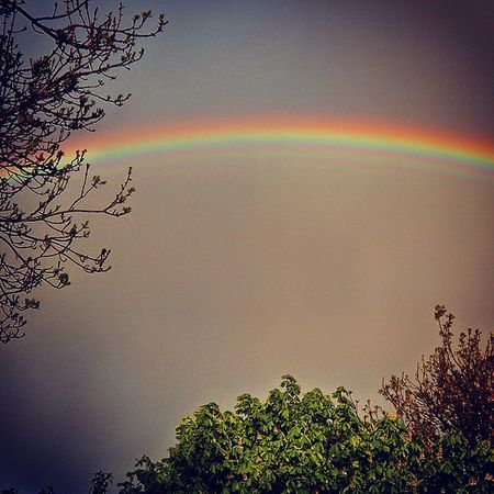 My grandma always said a rainbow went round the whole planet..........and I believed her! 😇 Rainbow Inmygarden Nature Refractedlight