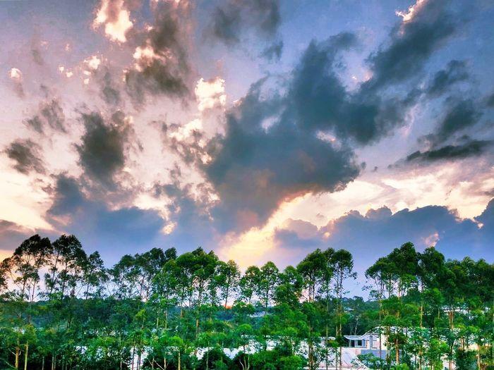 火烧云 Plant Tree Cloud - Sky Beauty In Nature Sky Growth No People