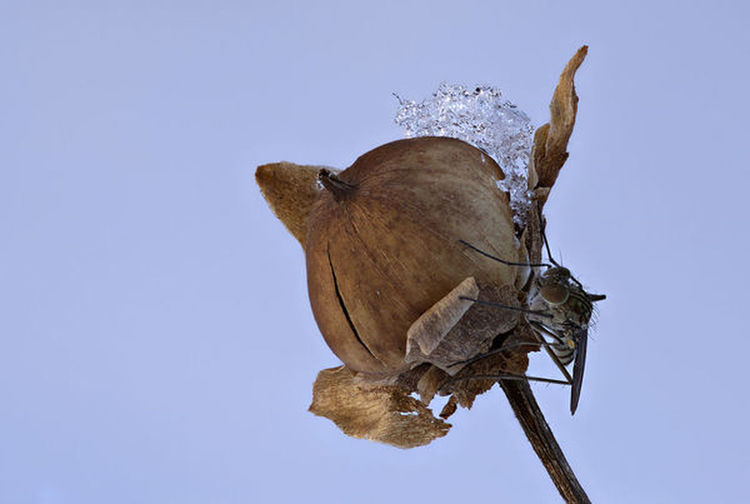 Low angle view of butterfly on dry plant against clear sky