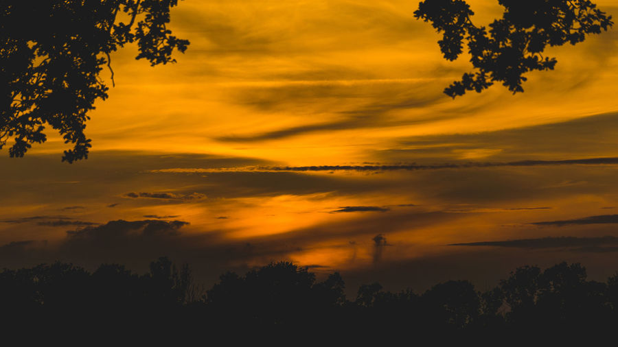 Sunset Sky Beauty In Nature Silhouette Cloud - Sky Plant Scenics - Nature Tree Orange Color Tranquility Tranquil Scene Nature Idyllic No People Outdoors Non-urban Scene Growth Dramatic Sky Low Angle View Yellow EyeEm Best Shots EyeEm Selects EyeEm Nature Lover EyeEm Gallery My Best Photo