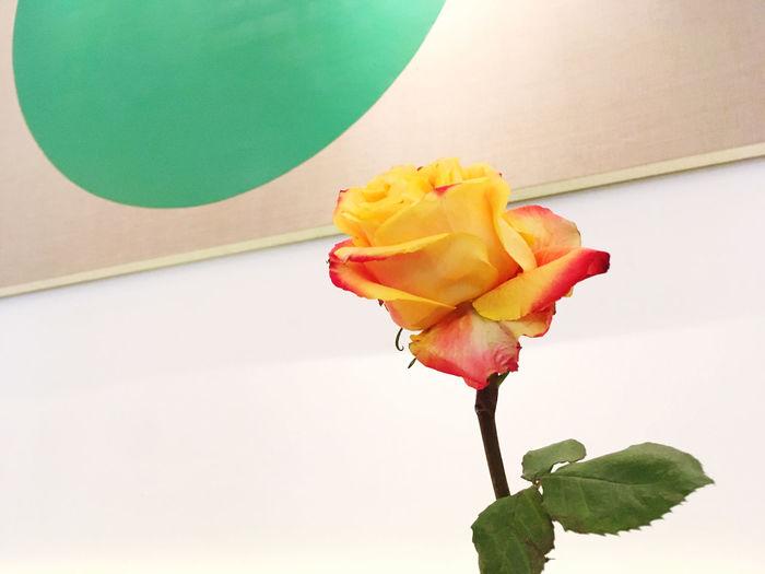 🌹🎨 Flower