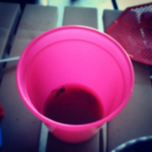shouldnt of drank the koolaid Poorguy