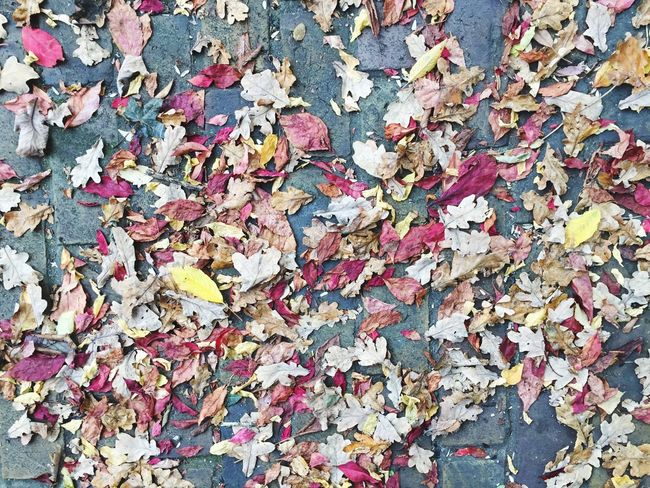 Beauty In Nature Scenics Orange Leaf Autumn Leaves Flat Lay Leaves Pink Leaves Yellow Leaves Autumn Leaves On Asphalt Autumn Leaves On Ground
