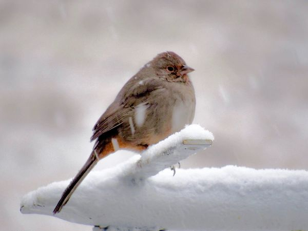 Bird Photography Snow Winter Cold Temperature Bird One Animal Animal Themes Animals In The Wild Nature No People Close-up Animal Wildlife Day