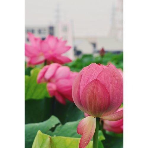 雨止んでよかった〜😆 Flowerporn Flower Flowers Nikon Naturelovers Nature_collection Eye Em Nature Lover EyeEm Best Shots Beautiful Nature Urban Geometry