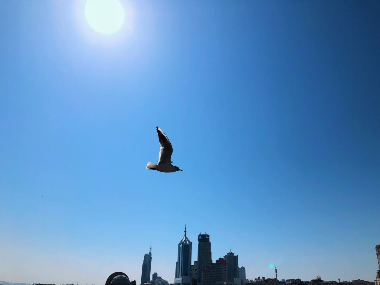 bird, animals in the wild, vertebrate, animal wildlife, sky, flying, animal themes, animal, architecture, built structure, spread wings, low angle view, building exterior, mid-air, blue, one animal, clear sky, nature, sunlight, no people, sun, seagull, outdoors, office building exterior, skyscraper
