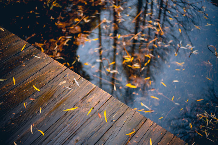 High angle view of leaves on wood by lake