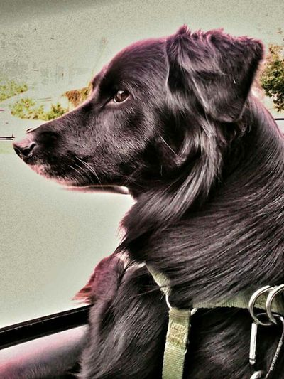 <3 sairubers Pets Dog❤ Dog Love Art Playing Fun Beauty <3 Sairubers Adventure