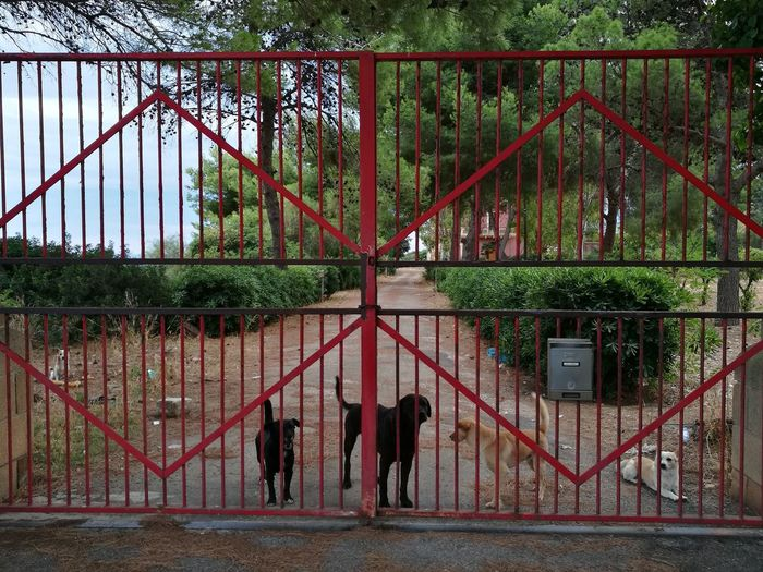 Dogs standing by gate