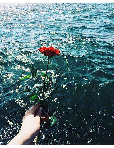 He loves me 🥀 Izmir Alsancak Alsancak Kordon Meer Deniz Beach Vacations Holiday Vacation Holidays Romantic Rose🌹 Gul Gift Suprise Süpriz Hediye Geschenk Romantizm Romantisch Love Aşk Liebe Soulmate Ruhikizi The Week On EyeEm