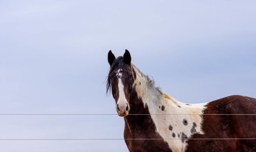 Horse standing against blue sky