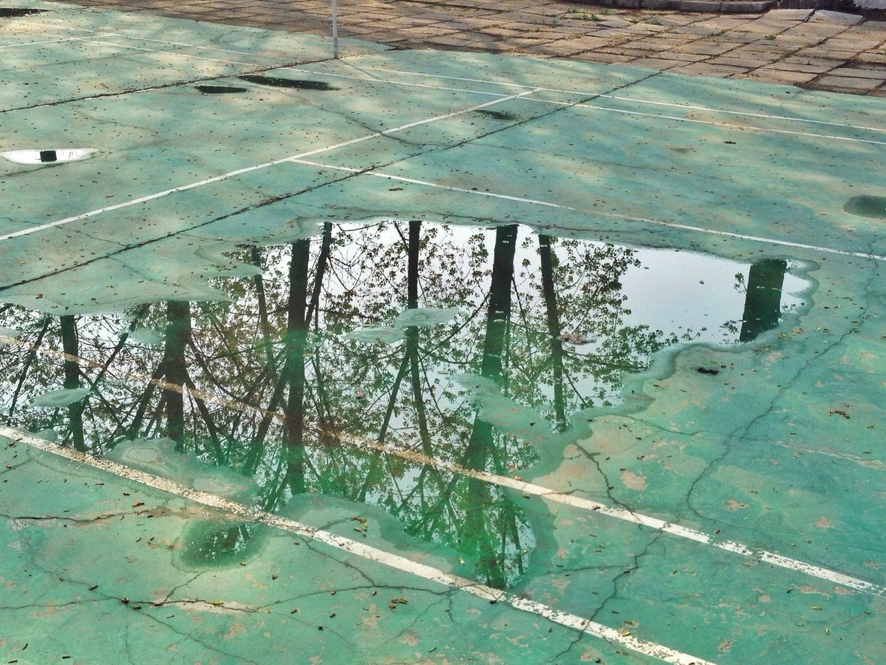 Reflection of trees on puddle