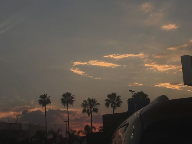 Dark side of my pictures 🌅 Cloud - Sky Sky Sunset Car Tree Palm Tree Silhouette Nature Beauty In Nature No People