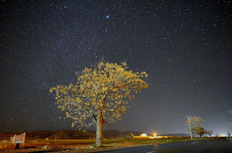 oujda surroundings by night.the sky is amazing سبحان الله الحمد لله سبحانك ربي Oujda City, Morocco Great Morocco Beautiful Night Starry Night Stars Starry Sky Tree Scenics Milky Way Sky Illuminated Nature