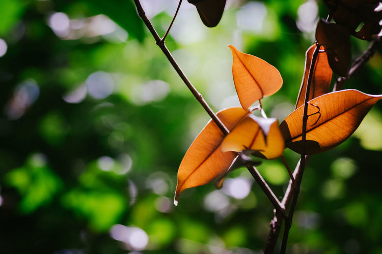 Close-up of orange butterfly on plant