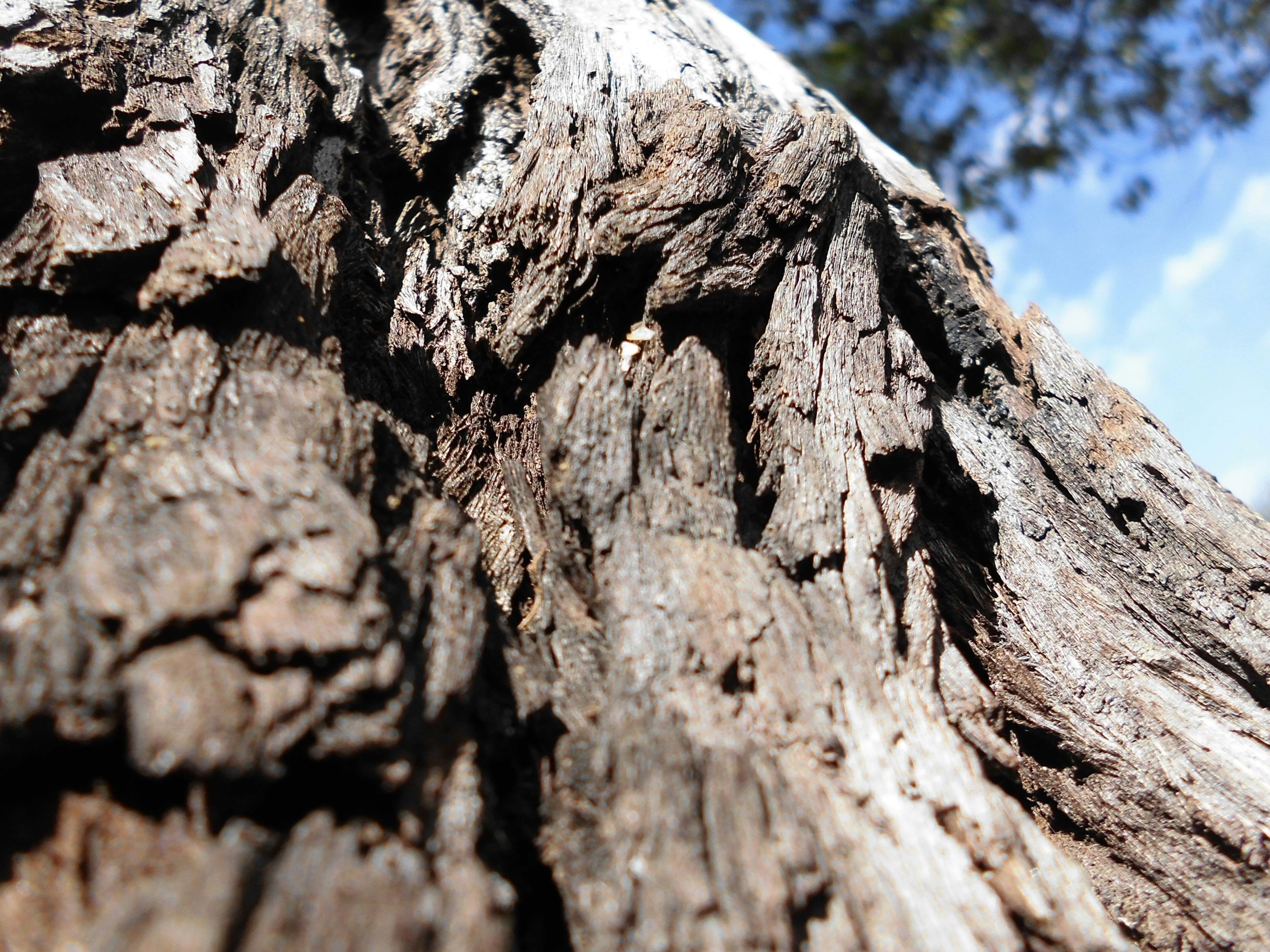 textured, rough, tree, tree trunk, bark, low angle view, close-up, nature, focus on foreground, natural pattern, outdoors, day, tranquility, wood - material, no people, sky, rock - object, growth, selective focus, pattern