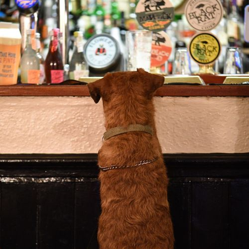 Bar Beer Being Served Close-up Cotswolds Customer  Dog England Focus On Foreground No People Pint Pub Selective Focus Service Waiting
