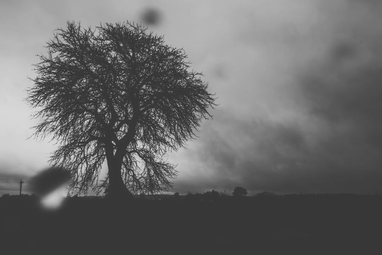 Atmosphere Atmospheric Mood Bare Tree Beauty In Nature Belarus Nature Black And White Copy Space Dusk Exceptional Photographs From My Point Of View Landscape Majestic Nature No People Non-urban Scene Landscapes With WhiteWall On The Rain Our Best Pics Outdoors Overcast Scenics Sky Tranquil Scene Tranquility Weather