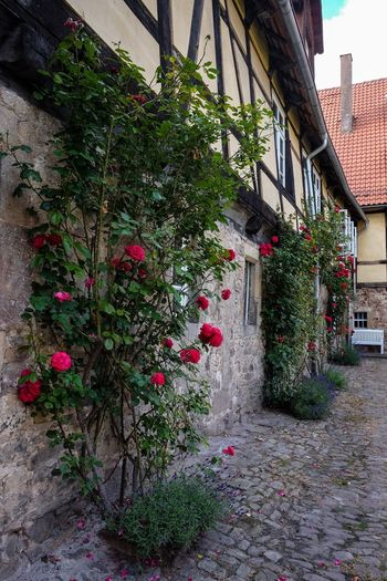 Fachwerkhaus Hof Lippoldsberg Rosenspalier Architecture Building Exterior Built Structure Day Flower Growth House Ivy Nature No People Outdoors Plant Window Box