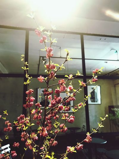 Plant Growth Decoration No People Nature Flower Flowering Plant