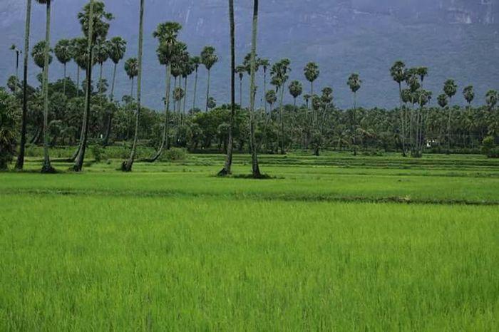 Hello World First Eyeem Photo Altars India. ....kerala. ...nature's. ... Learn & Shoot: Simplicity