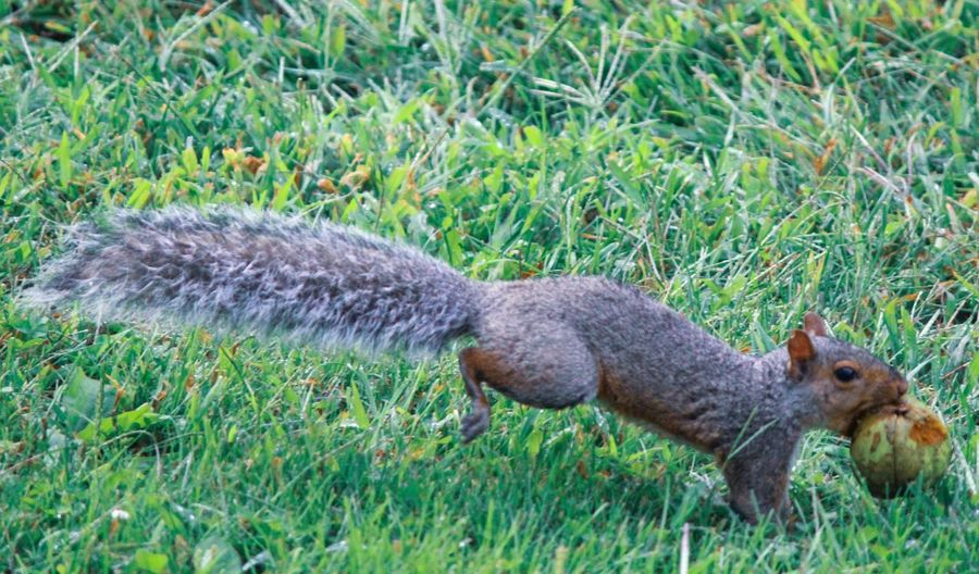 Grass Animal Animal Themes Plant Animal Wildlife Green Color One Animal Nature Animals In The Wild Squirrel Outdoors No People