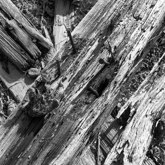 Wood - Material Rough Textured  Weathered Abandoned Damaged No People Outdoors Day Bad Condition Tree Decline Nails Mobiography Malephotographerofthemonth Shootermag_usa Bad Condition Rusty