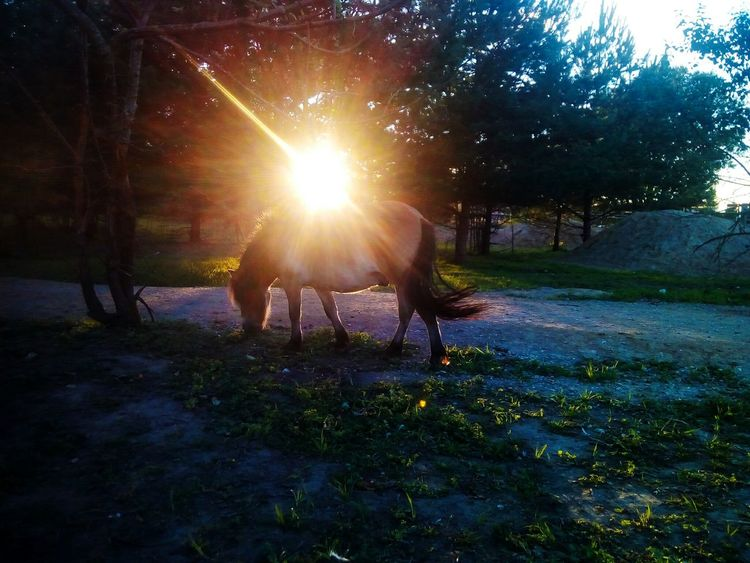 Silhouette Outdoors Nature Sunset Beauty In Nature Tree Sky Horse Mini Horse Pet Portraits Paint The Town Yellow