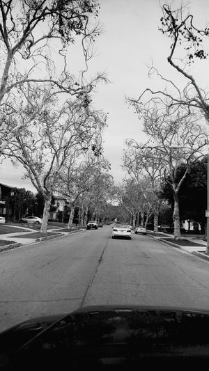 Cars on road along trees
