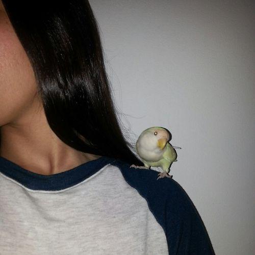 EyeEm Me I Mypic Efrat Efratview Bird Mybird Yellow Cute Blackhair Girl Animal Nofilter Flash Like Followme Follow Day Like4like