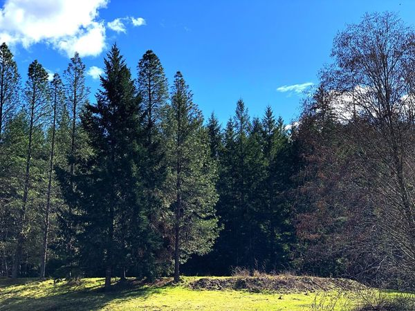 Forest Through the Trees Happy Day Forest Blue Sky Tree Plant Sky Nature Growth Beauty In Nature Day Sunlight Tranquil Scene Green Color Scenics - Nature Outdoors
