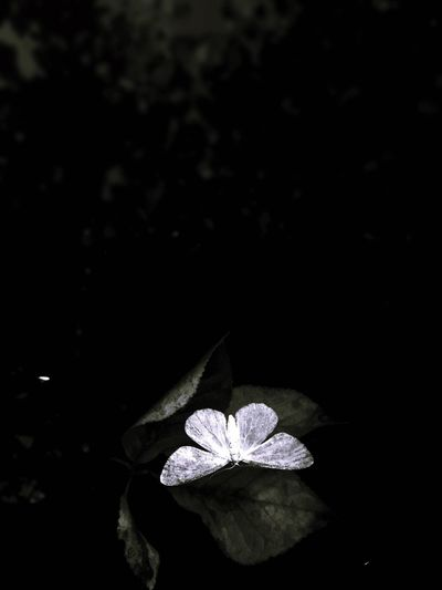 EyeEmNewHere but·ter·fly ef·fect noun (with reference to chaos theory) the phenomenon whereby a minute localized change in a complex system can have large effects elsewhere. Nature Life&Death Blanckspaces Effect Butterfly Filters First Eyeem Photo