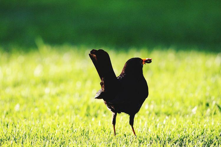 Bird Rural
