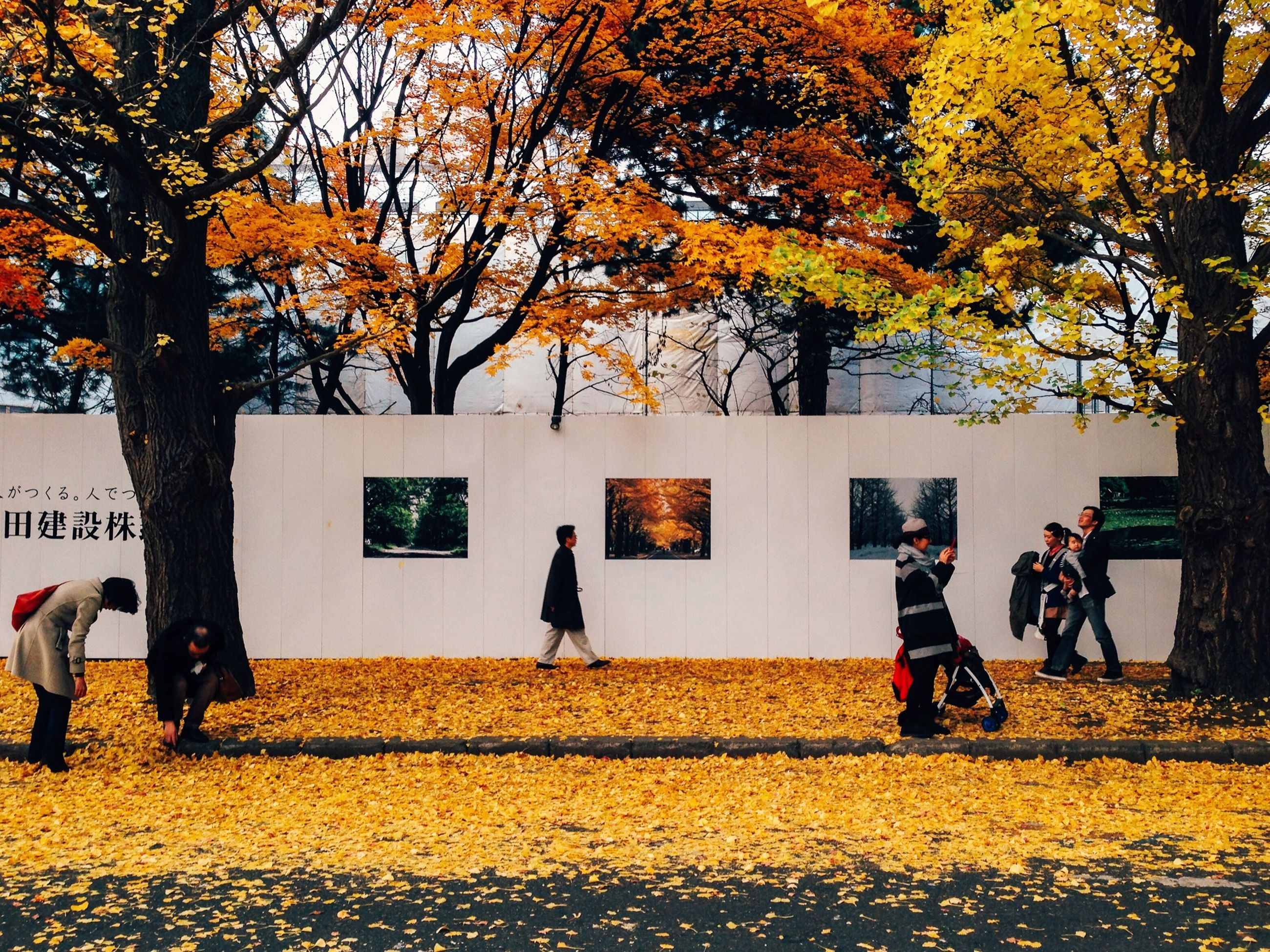 tree, autumn, lifestyles, men, leisure activity, change, season, yellow, person, full length, walking, rear view, togetherness, casual clothing, nature, orange color, park - man made space