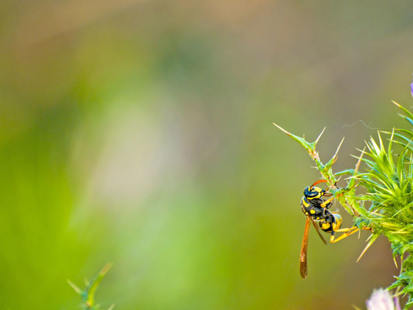 Animal Themes Animal Wildlife Animals In The Wild Beauty In Nature Close-up Copy Space Danger Dangerous Animals Environment Focus On Foreground Green Color Insect Leaf Nature No People One Animal Outdoors Plant Pollination Space For Text Spring Springtime Vespa Wasp Wildlife
