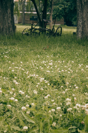 Beauty In Nature Bicycle Day Field Flower Fragility Freshness Grass Green Color Growth Nature No People Outdoors Plant Scenics Tranquil Scene Tranquility Tree