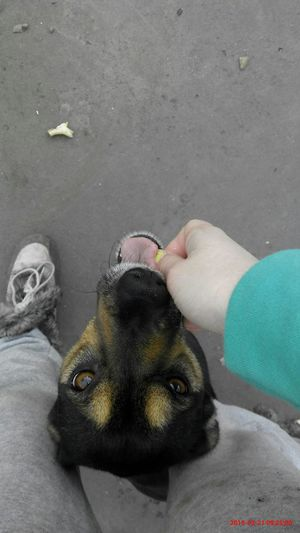 My dog Cute Pets Cute Dog  Love Lovehersomuch MyDarling  Bestfriends