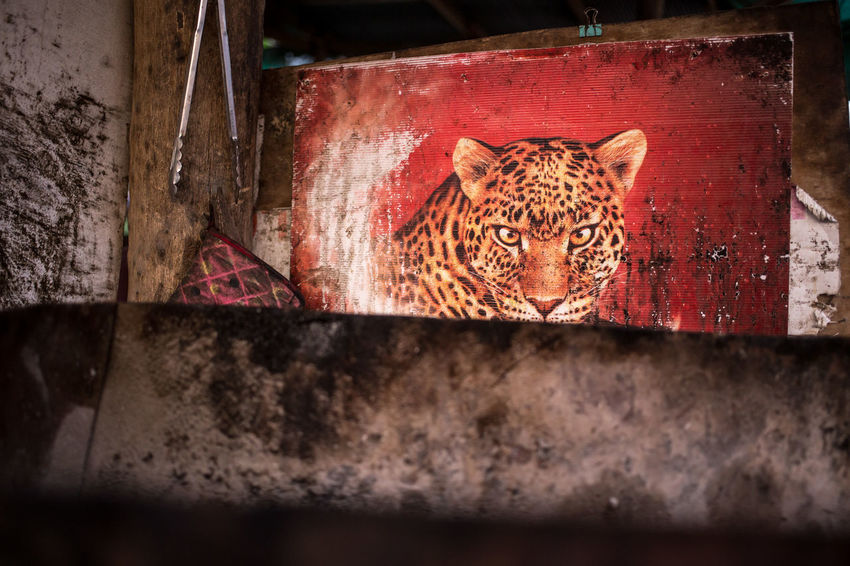 Wildlife spotted on Phangan island, southern Thailand Advertisement Advertising Animal Animal Themes Beer Cat Eye Contact Feline Full Moon Party Island Kitchen Koh Phangan Leo Leopard National Geographic Observing One Animal Phantom South East Asia Street Food Thailand Watching You Wild Animal Wild Cat Wildlife